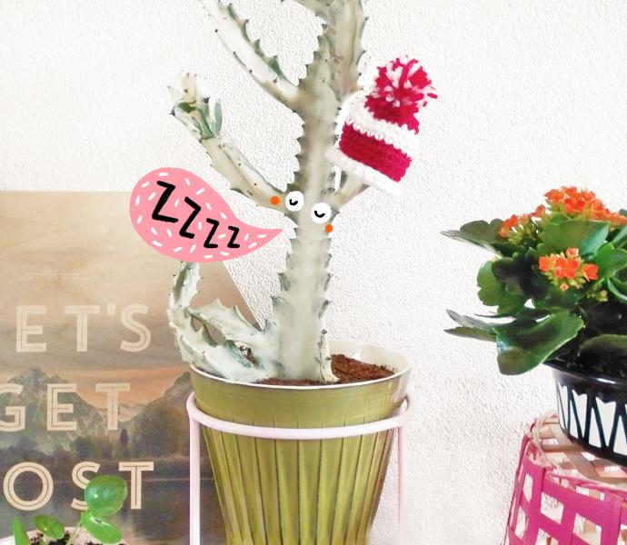 cactus_muts